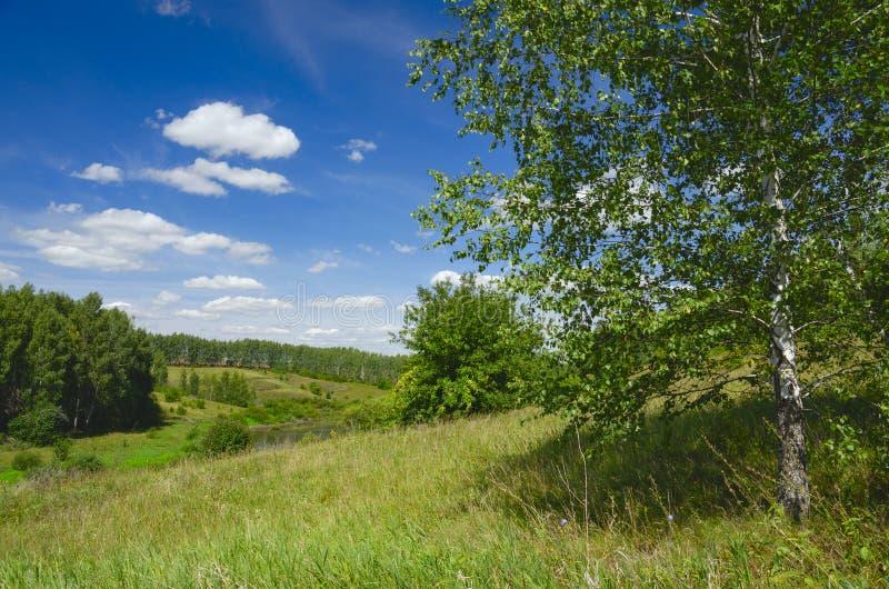 Soligt sommarlandskap med gröna kullar, floden, fält och avlägsna trän royaltyfri bild