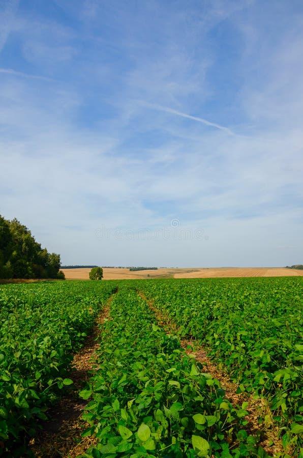 Soligt sommarlandskap med jordlandsvägen som passerar till och med det gröna sojabönafältet royaltyfri fotografi