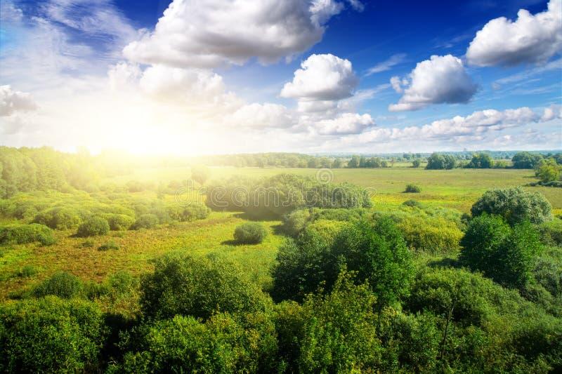 soligt under för blå sky för dagskogguld royaltyfri foto