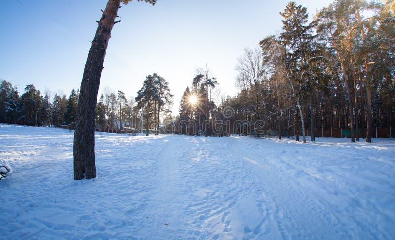 soligt väder i skog royaltyfri foto