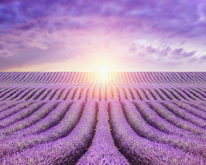 Solinställning på fält av lavendel royaltyfri foto