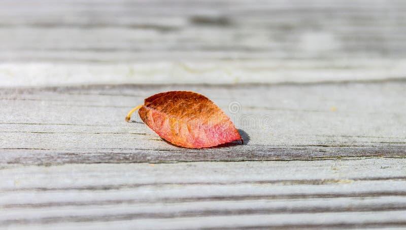 Solitair de herfst gekleurd blad royalty-vrije stock afbeeldingen