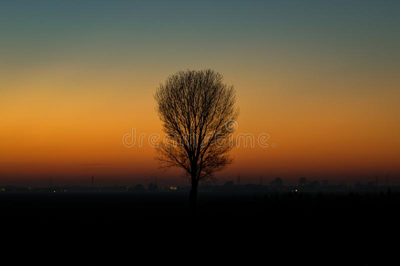 A solitair tree is silhouetted against the twilight sky stock photography