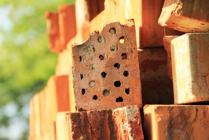 Solitaire bijen die in de baksteen nestelen royalty-vrije stock foto's