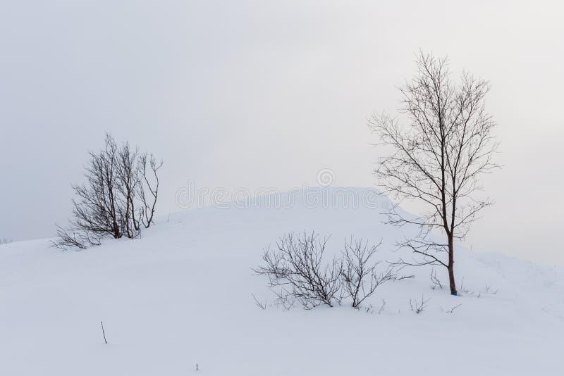 Solitaire bomen in witte de wintersneeuw met vlotte bergkrommen stock fotografie