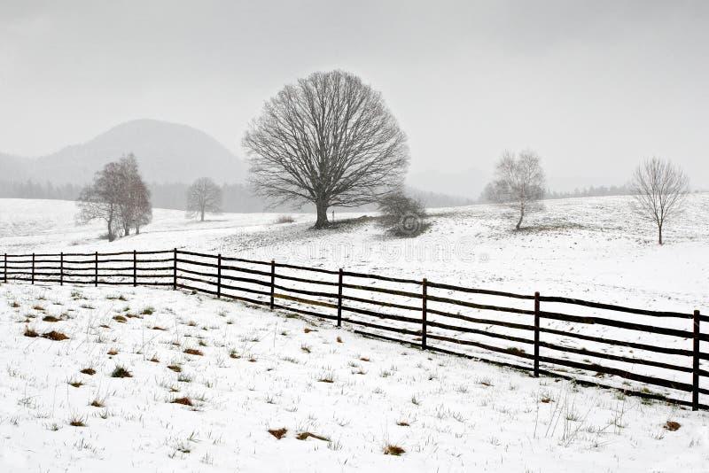 Solitaire boom in de winter, sneeuwlandschap met sneeuw en mist, mistig bos in backgroud royalty-vrije stock afbeelding
