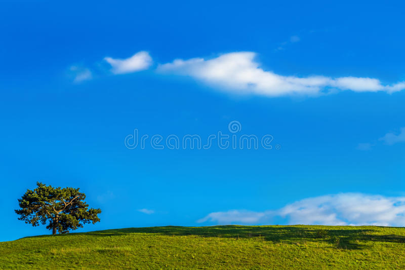 Solitaire boom en blauwe hemel stock afbeelding