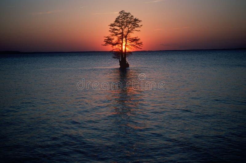 Solitaire boom in midden van rivier, VA stock afbeelding