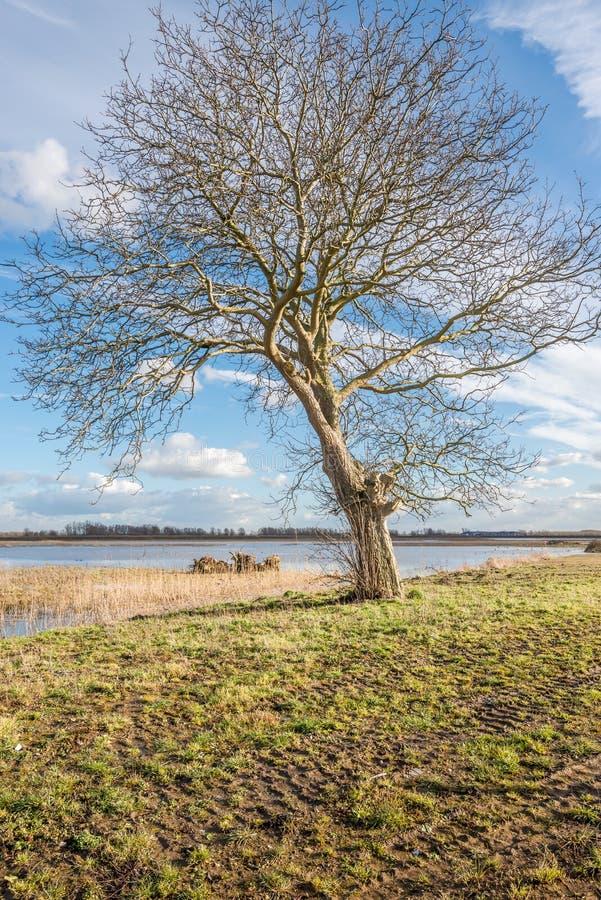 Solitaire boom op een zonnige dag in de wintertijd stock afbeeldingen