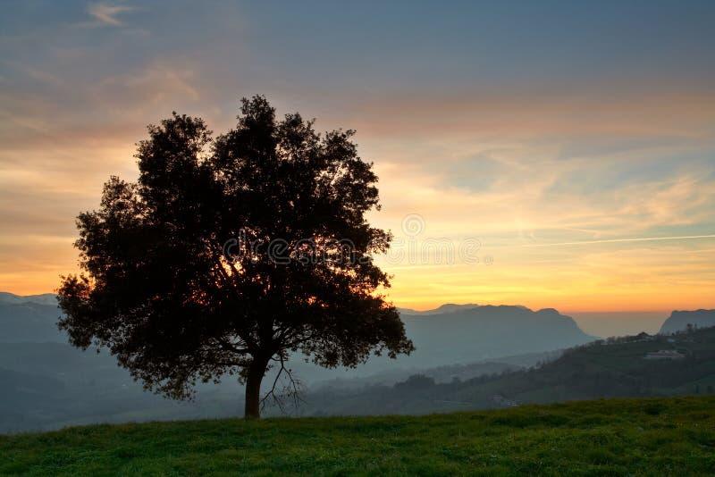 Solitaire boom op het mistoverzees stock foto