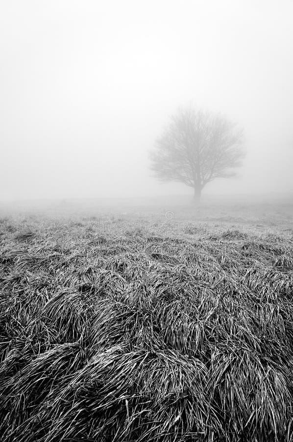 Solitaire en eenzame boom in zwart-wit royalty-vrije stock foto's