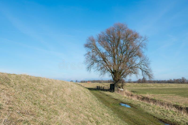 Solitaire naakte boom tegen een blauwe hemel in een landelijk landschap royalty-vrije stock foto's