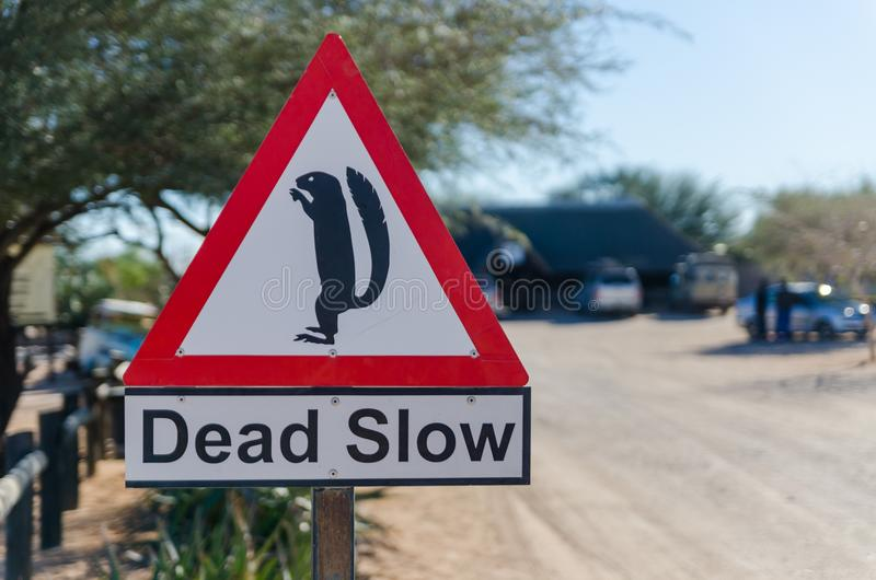 Solitaire, Namibia - July 05 2014: Dead Slow sign with meerkat at dusty desert town Solitaire stock image