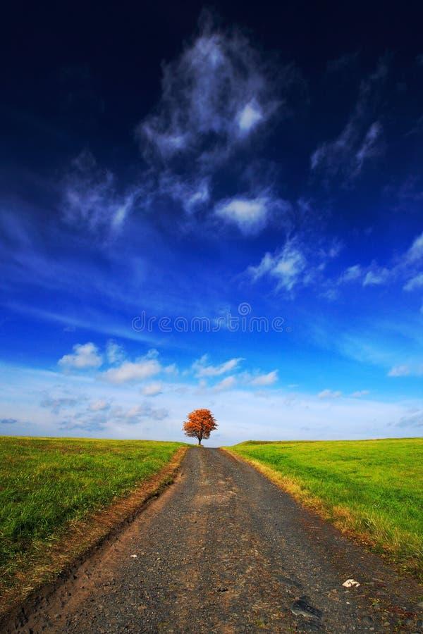 Solitaire oranje kastanjeboom tijdens de herfst Boom in de weide, met donkerblauwe hemel met witte wolken Weg tussen groene weide royalty-vrije stock afbeelding