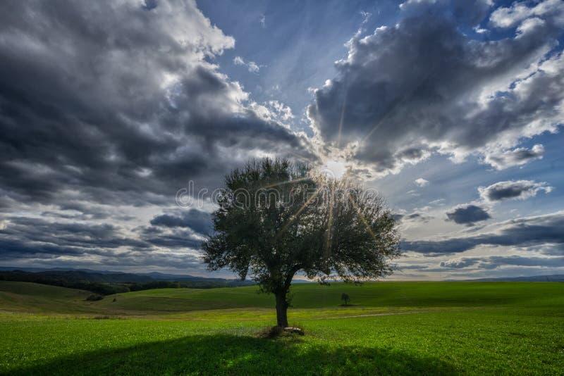 Solitaire perenboom, zon en hemel met wolken royalty-vrije stock afbeelding