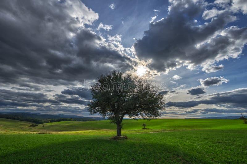 Solitaire perenboom, zon en hemel met wolken stock afbeelding