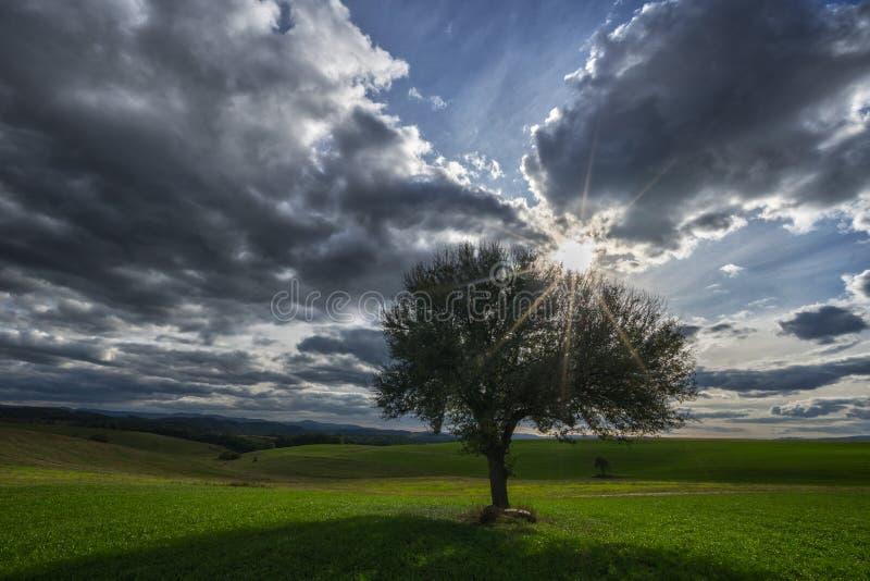 Solitaire perenboom, zon en hemel met wolken royalty-vrije stock foto's