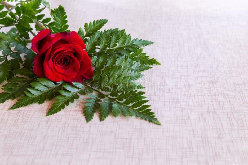 Solitaire rood nam en groen op geïsoleerde witte achtergrond toe stock foto