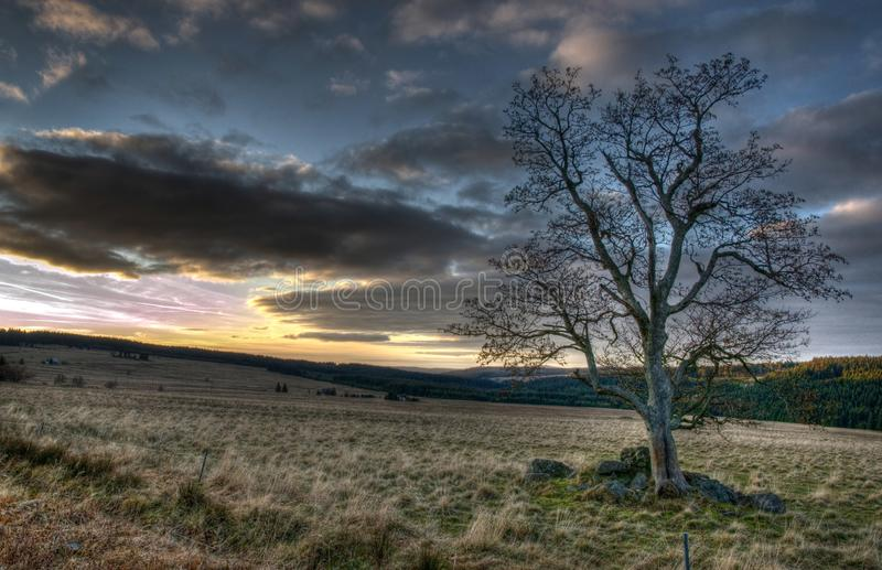 Solitaire tree in Ore Mountains royalty free stock image
