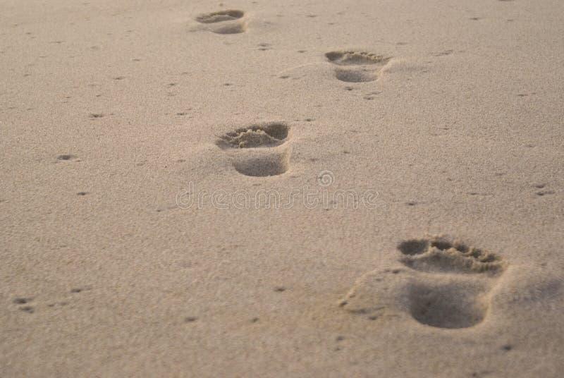 Solitaire voetafdrukken in zand royalty-vrije stock foto's