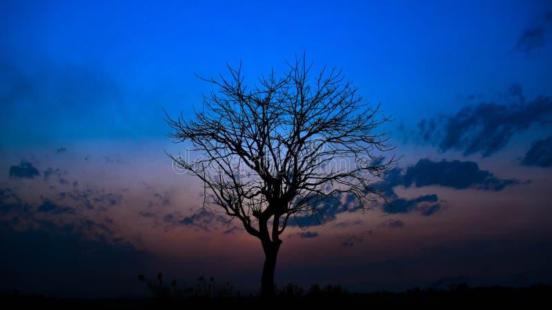 solitario fotografie stock