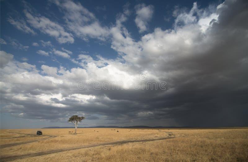 Solitary Acacia Tree against the rain clouds at masai Mara National Park stock photo