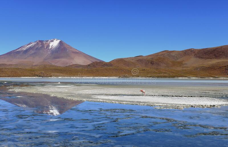 Solitary flamingo on a salt island with a beautiful volcano reflection into a lake, Salar de Uyuni Salt Flats - Bolivia. Solitary flamingo on a salt island with royalty free stock image
