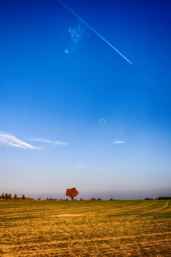 Solitary maple tree with coloured leafs at autumn/fall daylight. Countryside landscape, sunlight,blue sky. Czech Republic,Europe. HDR image stock photos