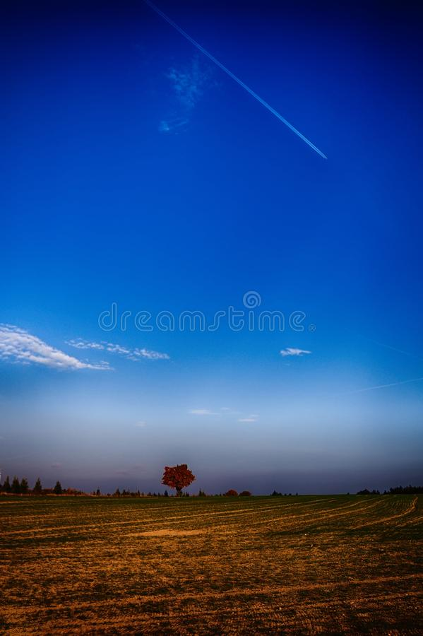 Solitary maple tree with coloured leafs at autumn/fall daylight. Countryside landscape, sunlight,blue sky. Czech Republic,Europe. HDR image royalty free stock photography