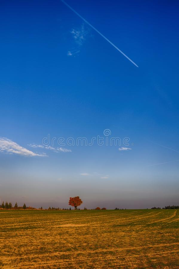 Solitary maple tree with coloured leafs at autumn/fall daylight. Countryside landscape, sunlight,blue sky. Czech Republic,Europe. HDR image royalty free stock photos