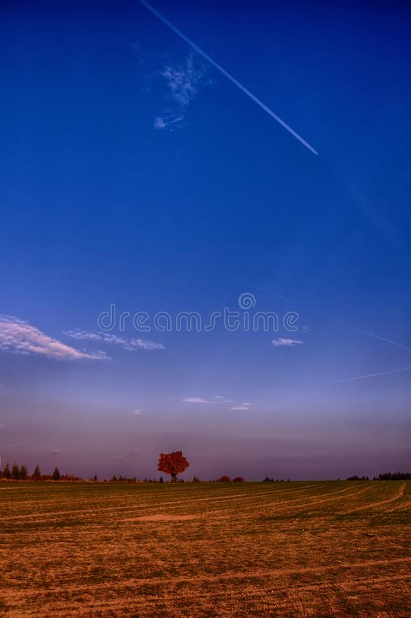 Solitary maple tree with coloured leafs at autumn/fall daylight. Countryside landscape, sunlight,blue sky. Czech Republic,Europe. HDR image stock images