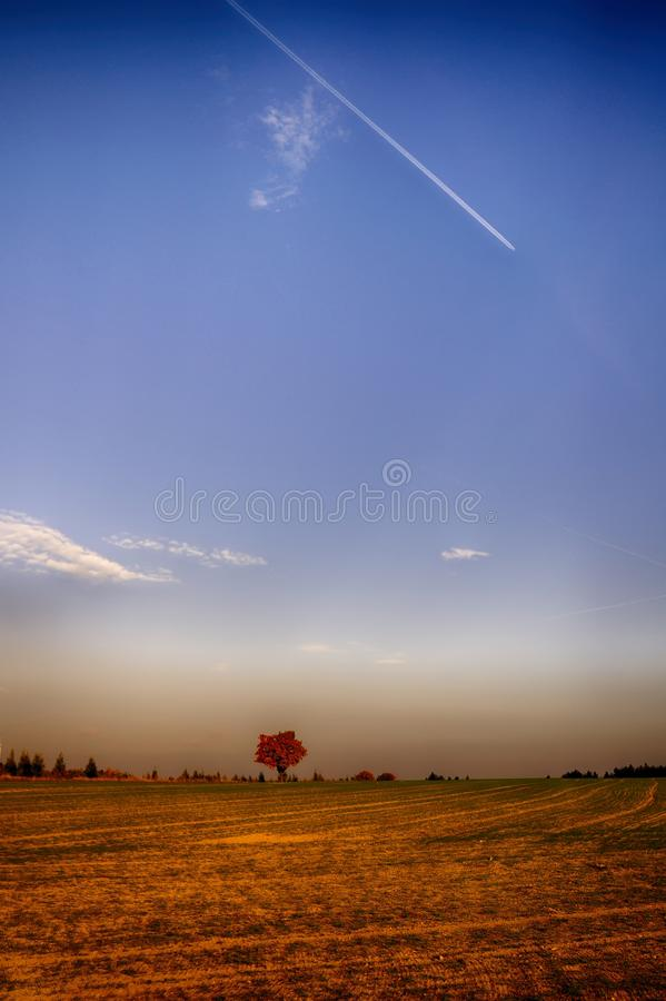 Solitary maple tree with coloured leafs at autumn/fall daylight. Countryside landscape, sunlight,blue sky. Czech Republic,Europe. HDR image stock image