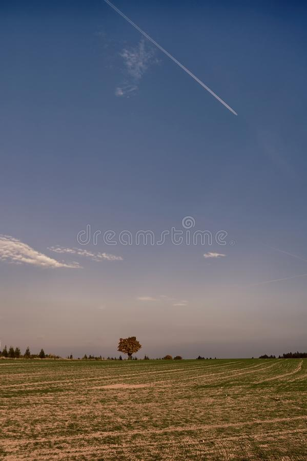 Solitary maple tree with coloured leafs at autumn/fall daylight. Countryside landscape, sunlight,blue sky. Czech Republic,Europe. HDR image royalty free stock images