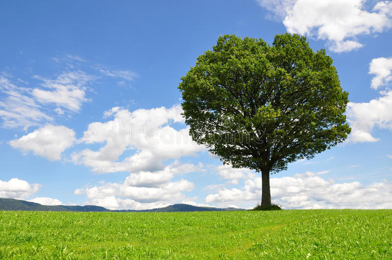 Download Solitary tree stock photo. Image of idyll, summer, landscape - 10782830