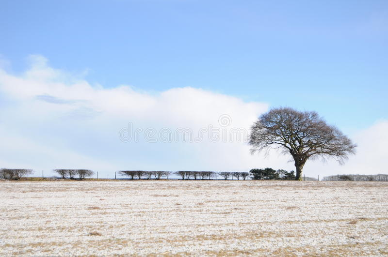 Download Solitary Tree stock photo. Image of winter, branches - 12905126