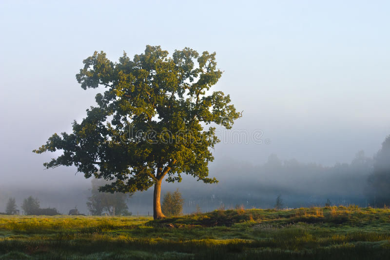 Download Solitary tree stock image. Image of sunny, nature, solitary - 23695089