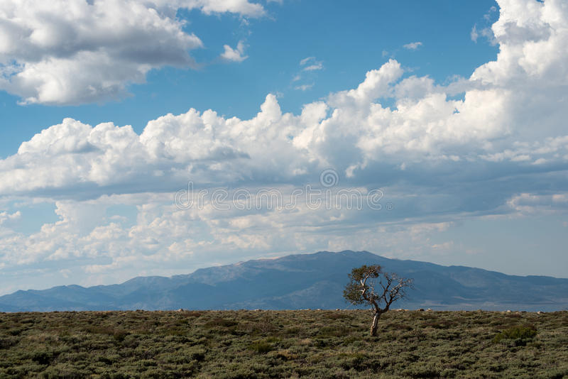 Download Solitary tree stock image. Image of scene, white, valley - 25356649