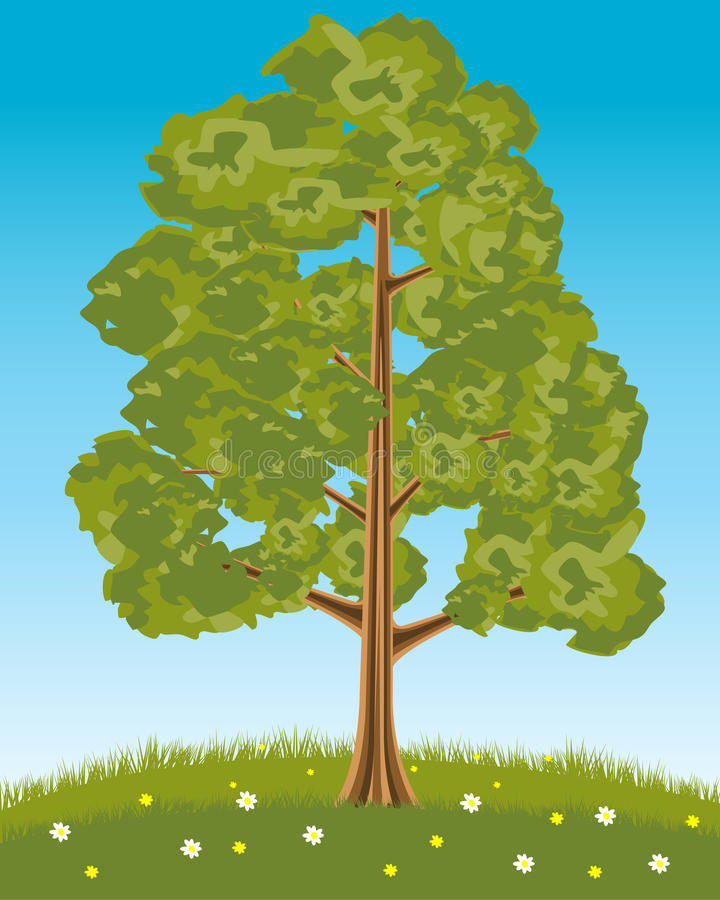 Download Solitary tree stock vector. Image of vector, glade, cortex - 28783086