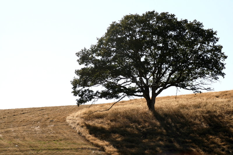 Download Solitary Tree stock photo. Image of field, silhouette - 2897422