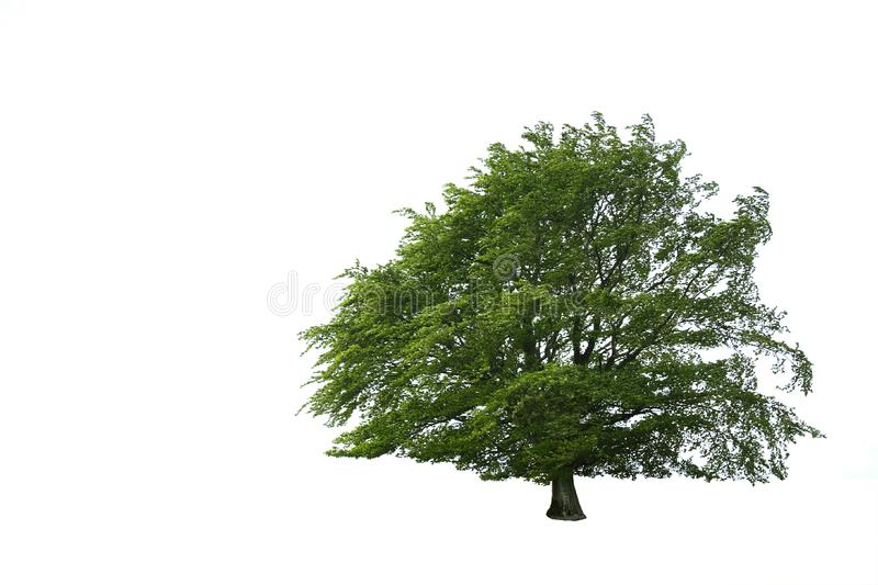 Solitary Tree stock images