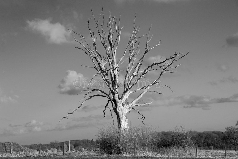Download Solitary Tree stock image. Image of cloud, trunk, landscape - 8465801
