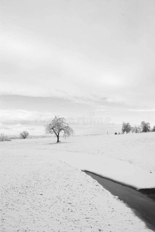 Solitary tree in the distance in snowfield in black and white stock photo