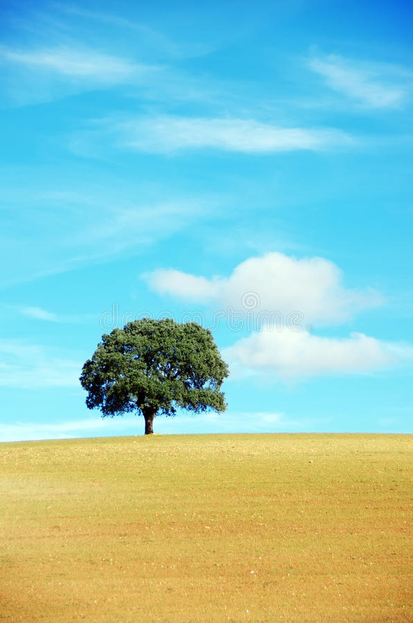 Solitary tree in field. royalty free stock photos