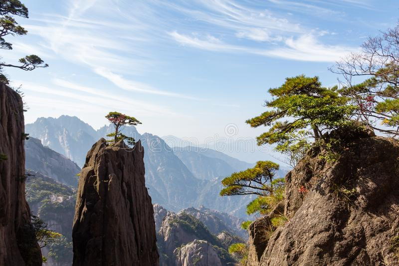 Solitary tree in the Grand Canyon of the West Sea on Mt Huangshan, China. Solitary tree in the Grand Canyon of the West Sea on Mt Huangshan Yellow Mountain royalty free stock image