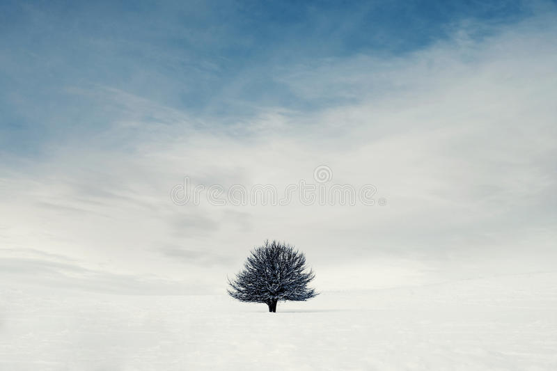 A solitary tree in the mountains royalty free stock photos
