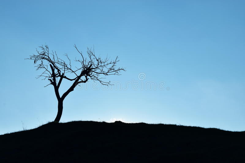 A solitary tree stock images