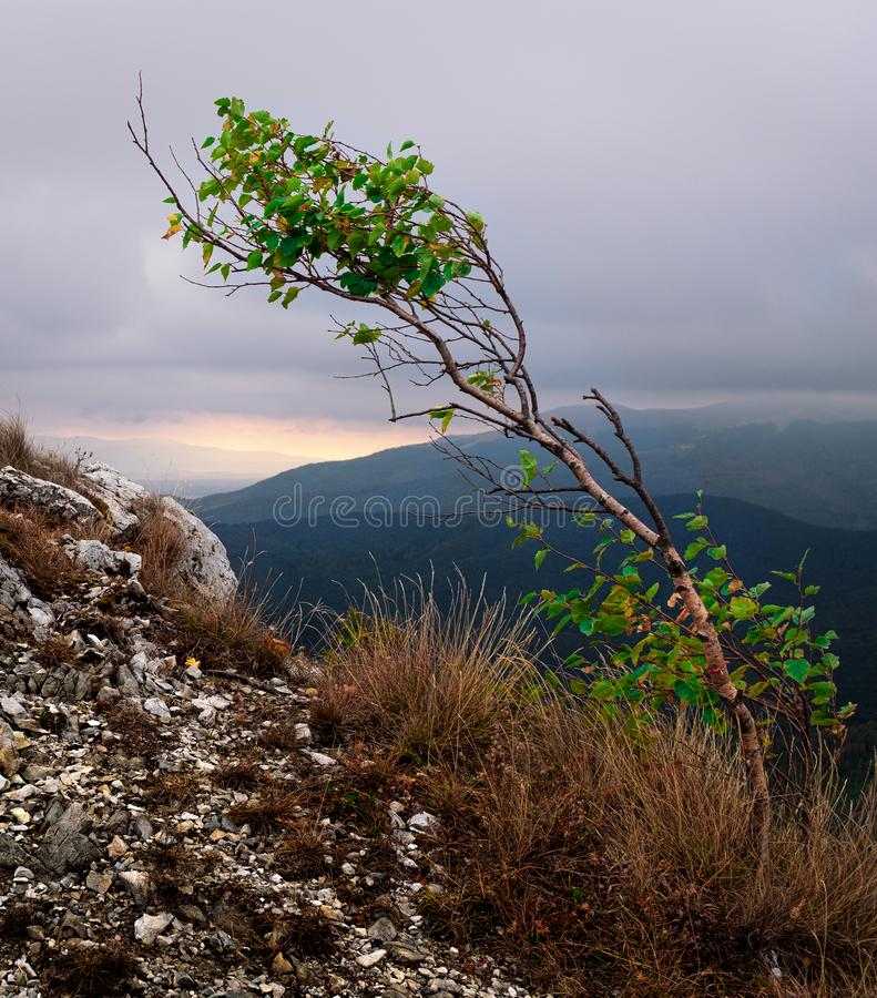 Solitary tree strength against the force of nature royalty free stock photography