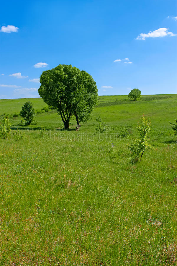 Download Solitary trees in a meadow stock photo. Image of high - 19816144