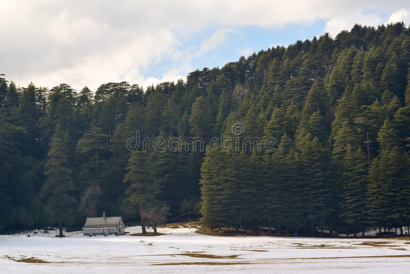 Solitary wood cottage at Khajjiar in Chamba Himachal Pradesh. Popularly known as mini Switzerland of india khajjiar is small hamlet between green meadows. During royalty free stock image