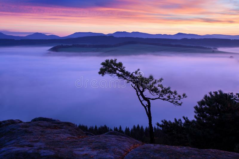 Sunrise Over Misty Landscape. Scenic View Of Foggy Morning Sky With Rising Sun Above Misty Forest. Middle Summer Nature Of Europe. Solitery tree. Sunrise Over stock photo